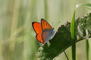 agro-biodiversita